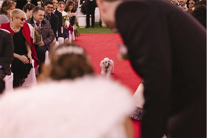 perrito camino al altar